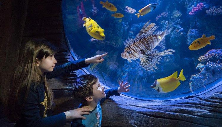 italie_adriatische_kust_kids_aquarium.jpg