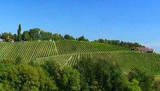 Oostenrijk, Steiermark - wijn