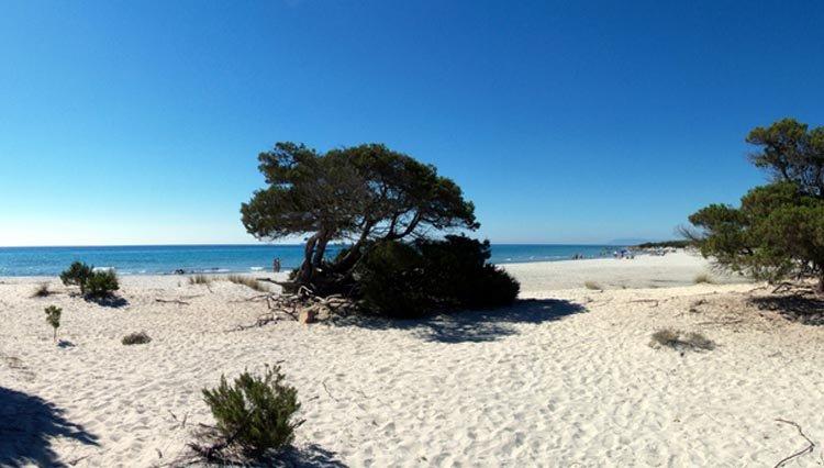 sardinie_strand_beach.jpg